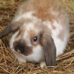 Rabbit on hay — Stock Photo