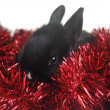 Small beautiful rabbit — Foto Stock