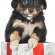 Puppy and gift box — Stock Photo
