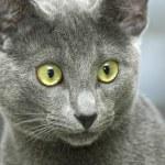 Cat close up — Stock Photo