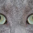 Royalty-Free Stock Photo: Cat\'s eye