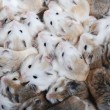 Many hamsters top view — Stock Photo