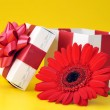 Opened gift box and red flower — Stock Photo
