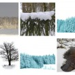 Different winter pictures — Stock Photo