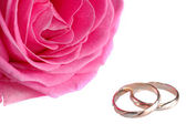 Pink rose with rings — Stock Photo