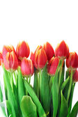 Red tulips — Foto Stock