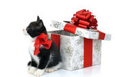 Small cute kitten with gift box — Stock Photo