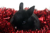 Small beautiful rabbit — Stock Photo