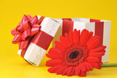 Gift box and red flower — Stock Photo