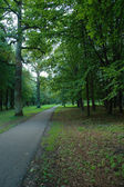 Road in the park — Stock Photo