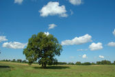 Summer landscape with tree — Stock Photo