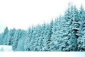 деревья со снегом — Стоковое фото