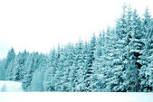 Trees with snow — Stock Photo
