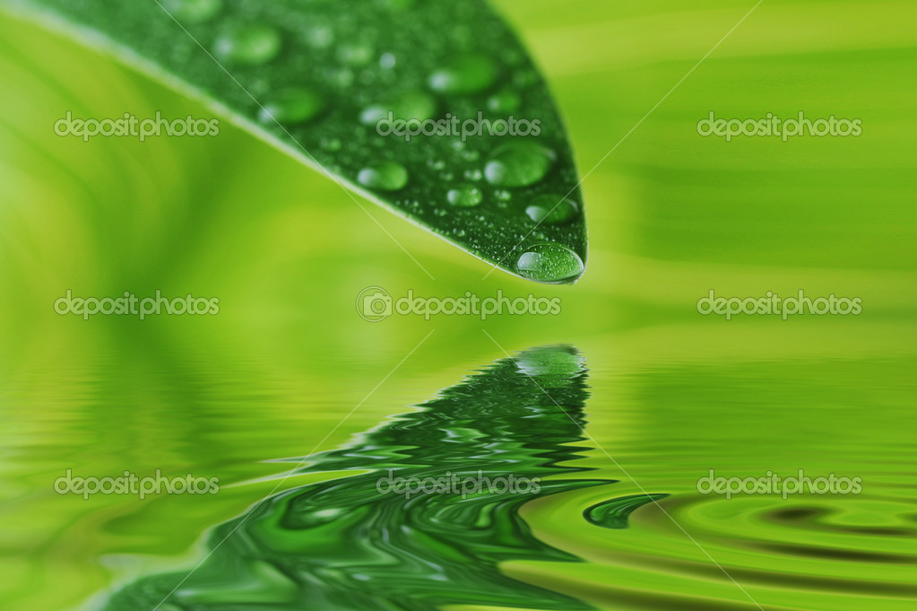 Green leaf with water drops close up — Stock Photo #2650147
