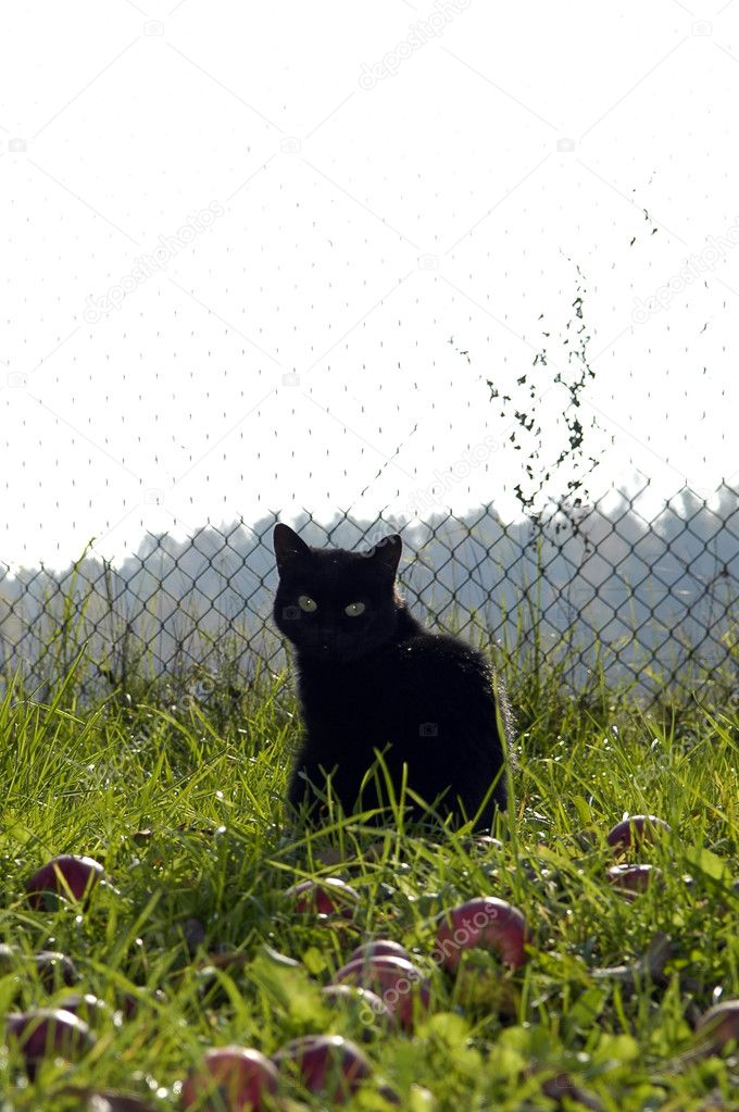 Black cat redound and looking back — Stock Photo #2651780