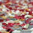 Rose petals and rice — Stock Photo