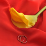 tecido vermelho e flor amarela — Foto Stock