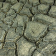 Stock Photo: Cracked earth Texture