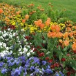 Flowers in park — Stock Photo #2662501
