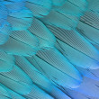 Stock Photo: Parrot feathers