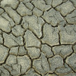 Drought crack background — Stock Photo