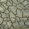 Stock Photo: Drought crack background