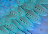 Parrot feathers — Stock Photo