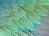 Texture feathers background — Stock Photo