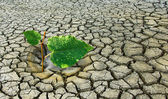 Global warming — Stock Photo