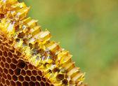 Honeycomb slice with honey — Stock Photo
