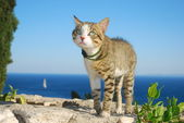 The cat on vacation — Stock Photo