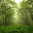 Forest mystic way - Foto Stock