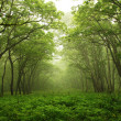 Stock Photo: Forest mystic way