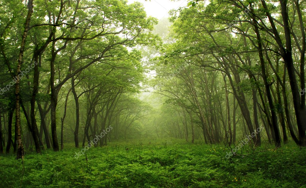 Forest mystic way, Primorye, Russia — Stock Photo #2569984
