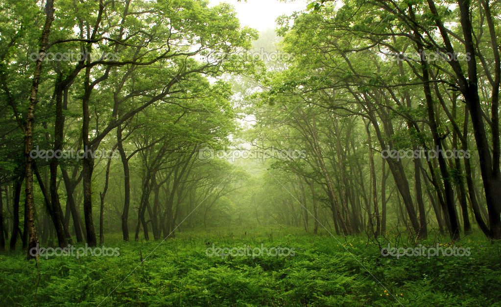 Forest mystic way, Primorye, Russia — Stockfoto #2569984