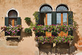 Windows in Venice — Stockfoto