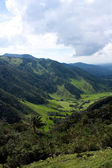 Cocora walley, Andean Colombia — Stock Photo