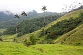 Cocora walley and wax palm — Stock Photo