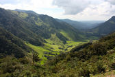 Cocora valley — Stock Photo