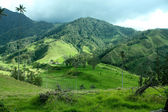 Cocora valley, Andean Colombia — Stock Photo