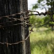 Stock Photo: Rusty Barb wire around post