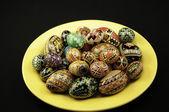 Vajíčka — Stock fotografie