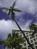 Palm tree angled — Stock Photo