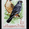 Stock Photo: Two birds on Hungaripostage stamp