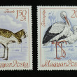 Постер, плакат: Two large birds on postage stamps