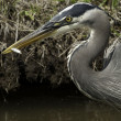 Stock Photo: Heron and small fish
