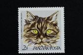 Brown striped angora cat — Stock Photo