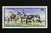 Hungarian horsesmen watching the herd. — Stock Photo