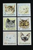 Seis gatos en húngaro estampilla — Foto de Stock