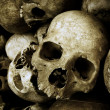 Royalty-Free Stock Photo: Skulls